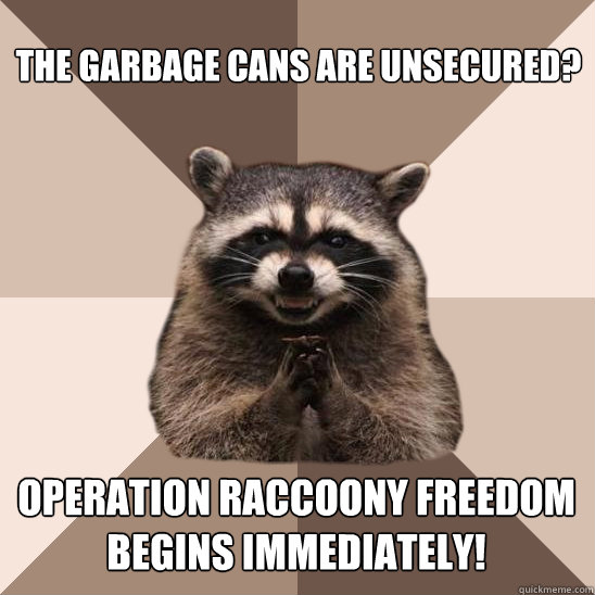 the garbage cans are unsecured operation raccoony freedom b - Evil Plotting Raccoon