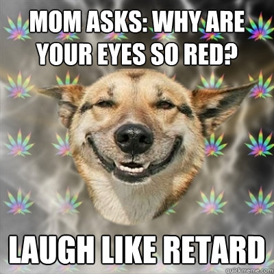 mom asks why are your eyes so red laugh like retard - Stoner Dog