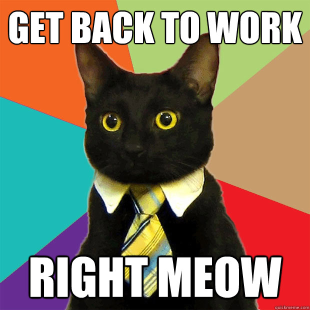Funny Meme Working : Get back to work right meow business cat quickmeme