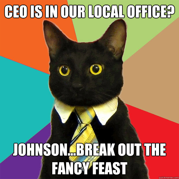 ceo is in our local office johnsonbreak out the fancy fe - Business Cat