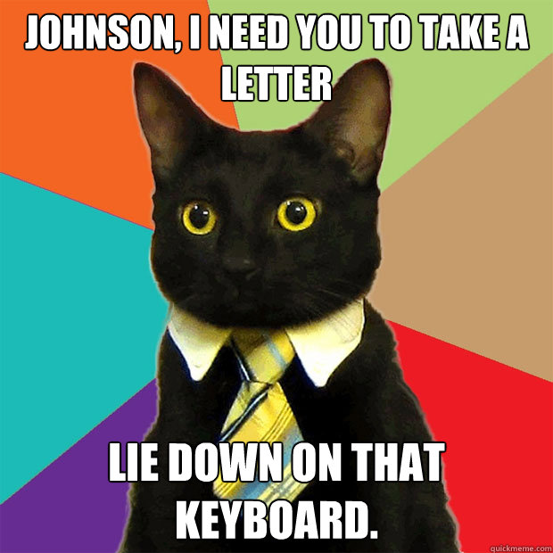 johnson i need you to take a letter lie down on that keyboa - Business Cat
