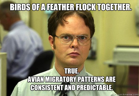 birds of a feather flock together true avian migratory pa - Schrute
