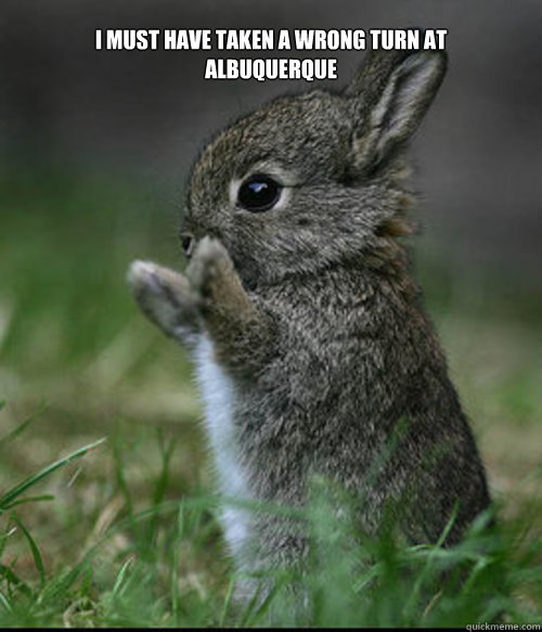 i must have taken a wrong turn at albuquerque  - Bunny