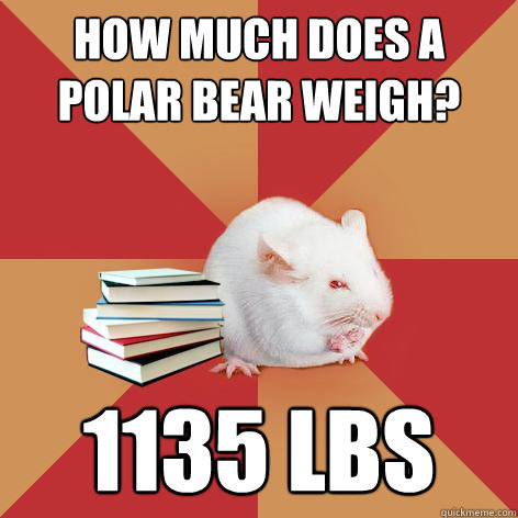 how much does a polar bear weigh 1135 lbs - Science Major Mouse