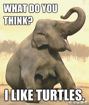 what do you think i like turtles - Irrelephant