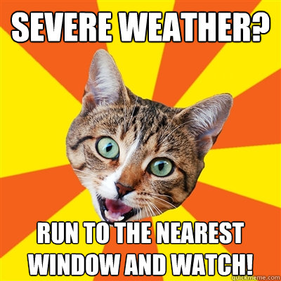 severe weather run to the nearest window and watch - Bad Advice Cat