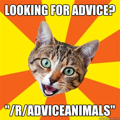 looking for advice radviceanimals - Bad Advice Cat