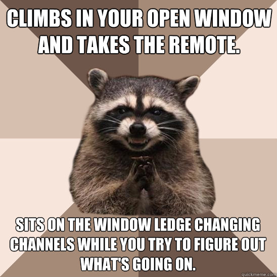 climbs in your open window and takes the remote sits on the - Evil Plotting Raccoon
