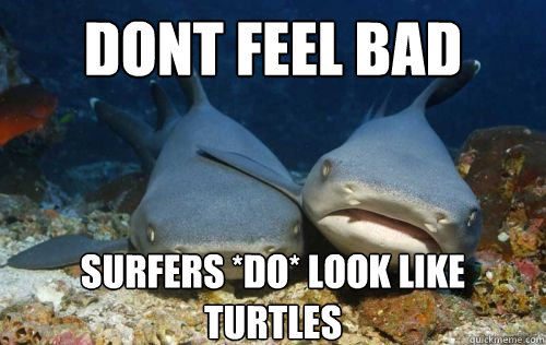 dont feel bad surfers do look like turtles - Compassionate Shark Friend
