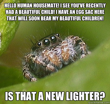 hello human housemate i see youve recently had a beautiful - Misunderstood Spider