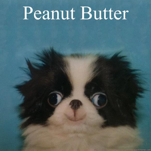 peanut butter puppy
