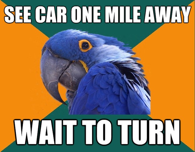 see car one mile away wait to turn - Paranoid Parrot