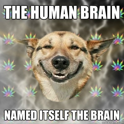 the human brain named itself the brain - Stoner Dog