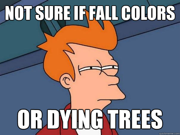 not sure if fall colors or dying trees - Futurama Fry