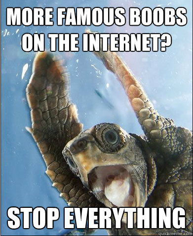 more famous boobs on the internet stop everything - Stop Everything Turtle
