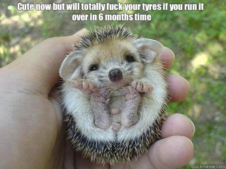 Cute now but will totally fuck your tyres if you run it over - Egel