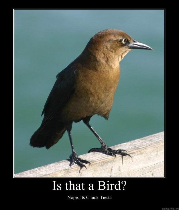 scary bird meme