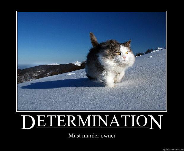 lion determination quotes inspirational quotesgram
