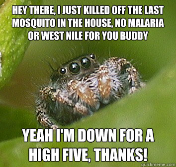 hey there i just killed off the last mosquito in the house - Misunderstood Spider