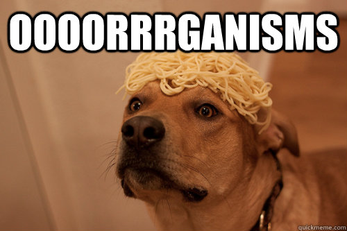 oooorrrganisms  - 10 Dog