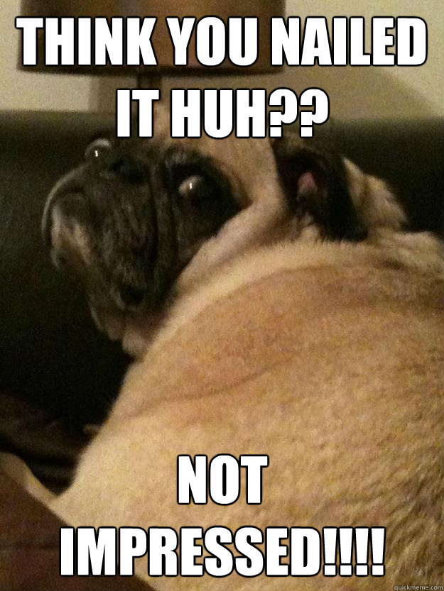 think you nailed it huh not impressed - Unimpressed Pug Not Impressed