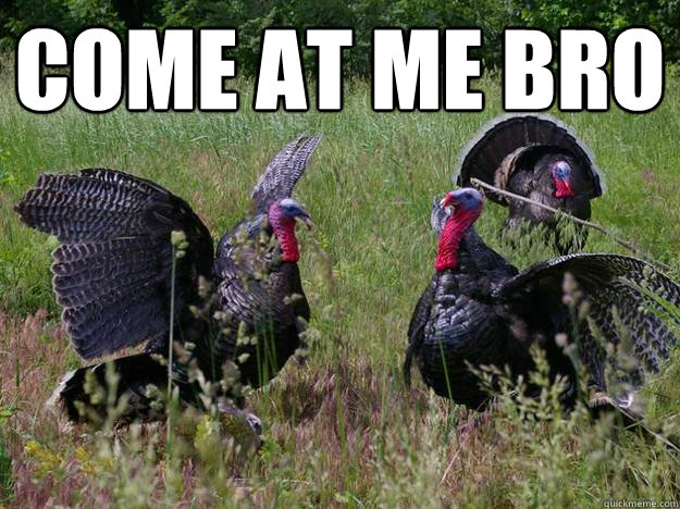 come at me bro  - Intimidating Turkey