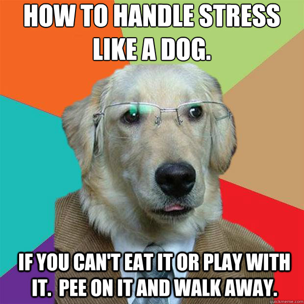 Funny Meme About Stress : How to handle stress like a dog if you can t eat it or