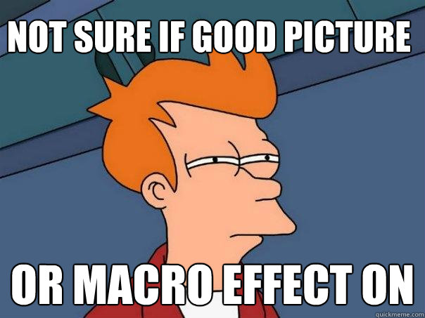 not sure if good picture or macro effect on  - Futurama Fry