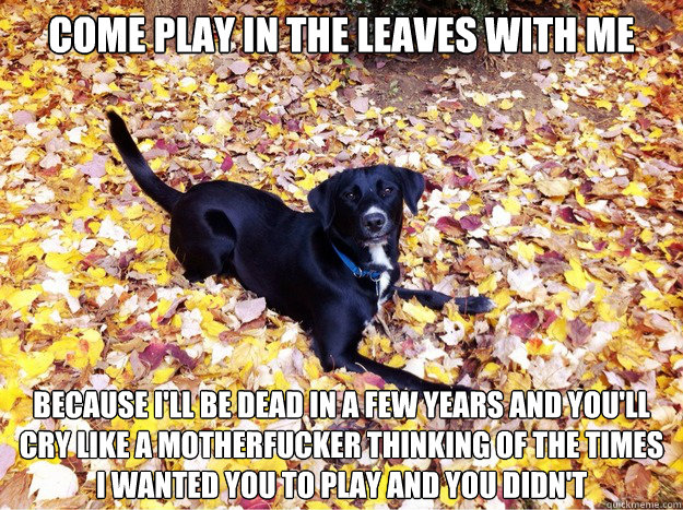 come play in the leaves with me because ill be dead in a fe - Guilt Giving Good Dog