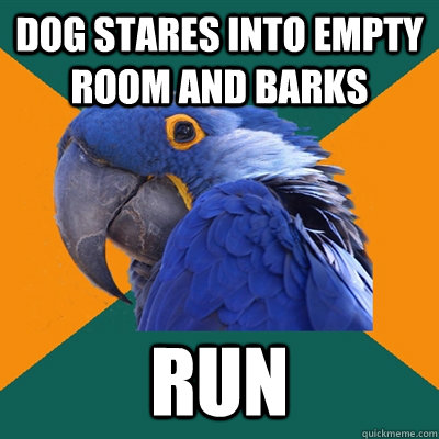 dog stares into empty room and barks run - Paranoid Parrot