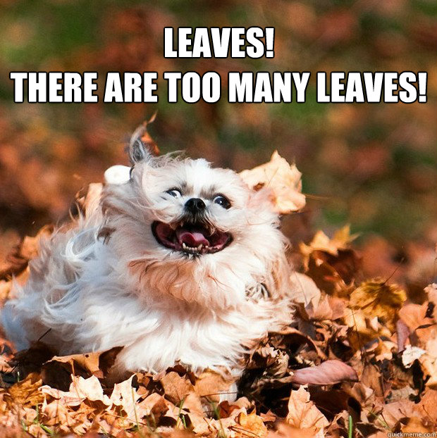 leaves there are too many leaves - Puppy in the Leaves