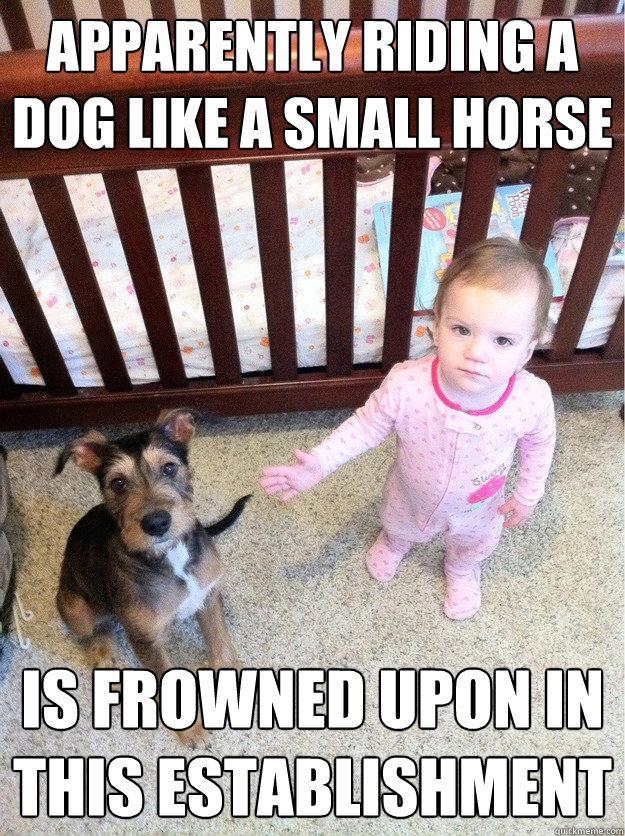 apparently riding a dog like a small horse is frowned upon  -