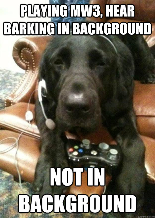 playing mw3 hear barking in background not in background - Dog playing MW3