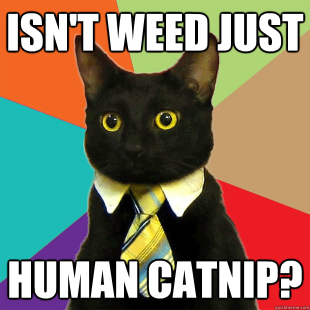 isnt weed just human catnip - Business Cat