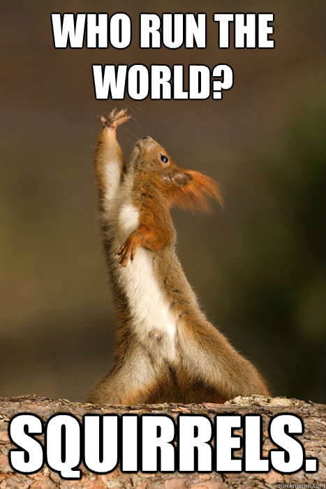 who run the world squirrels - Who Run The World Squirrels