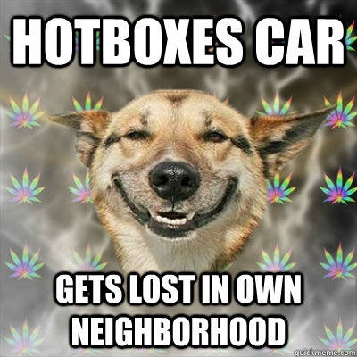 hotboxes car gets lost in own neighborhood - Stoner Dog