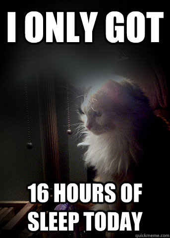 i only got 16 hours of sleep today - First World Cat Problems