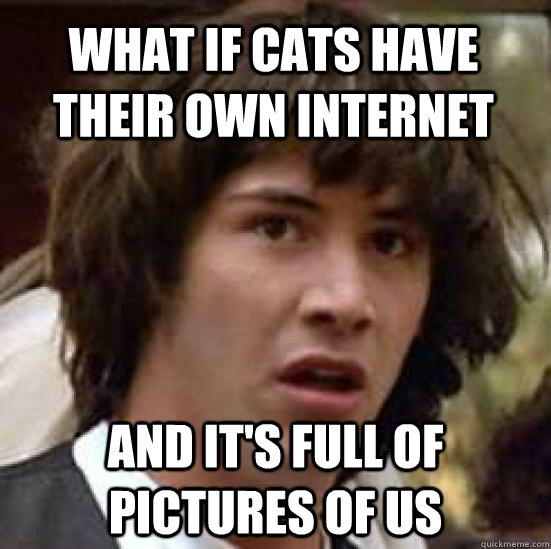 what if cats have their own internet and its full of pictur - conspiracy keanu