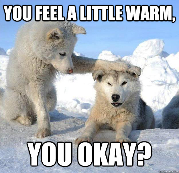 you feel a little warm you okay - Caring Husky