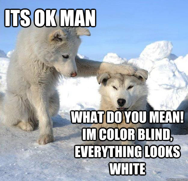 its ok man what do you mean im color blind everything look - Caring Husky