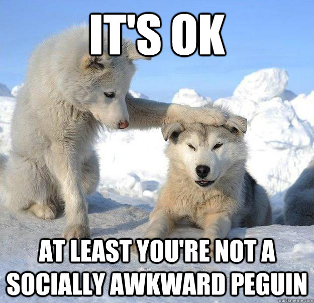its ok at least youre not a socially awkward peguin - Caring Husky