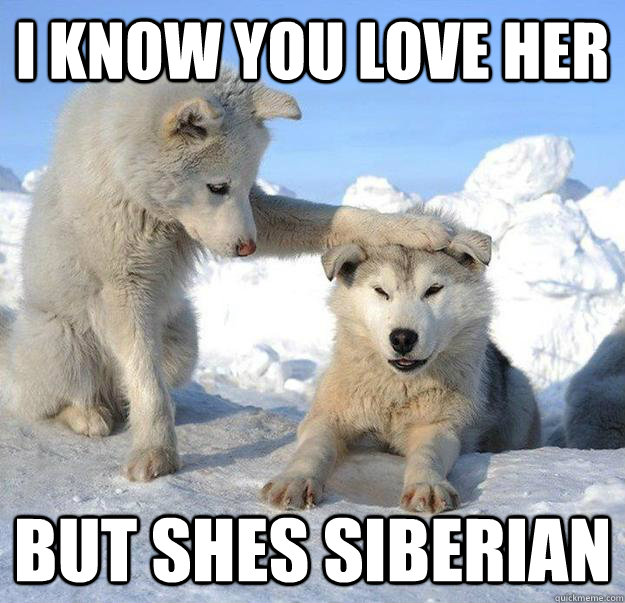 i know you love her but shes siberian - Caring Husky