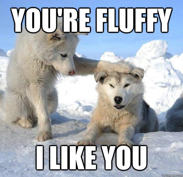 youre fluffy i like you - Caring Husky