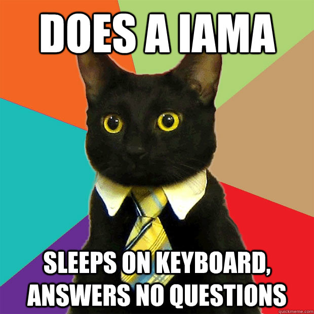 does a iama sleeps on keyboard answers no questions - Business Cat