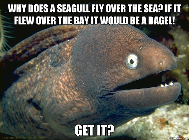 why does a seagull fly over the sea if it flew over the bay -