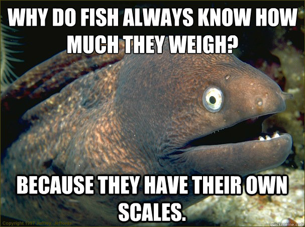 why do fish always know how much they weigh because they h - Bad Joke Eel
