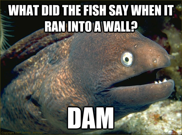what did the fish say when it ran into a wall dam - Bad Joke Eel