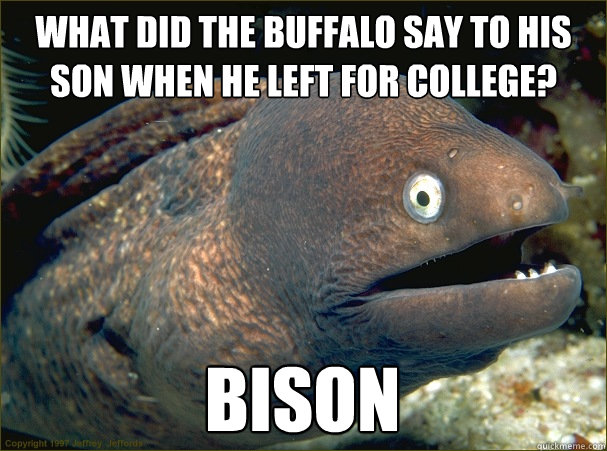 what did the buffalo say to his son when he left for college - Bad Joke Eel