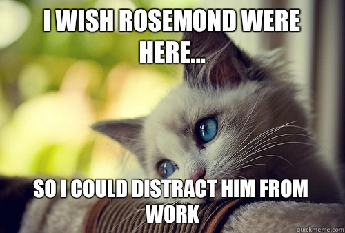 I wish rosemond were here so I could distract him from work - First World Problems Cat