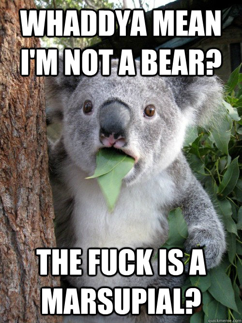 whaddya mean im not a bear the fuck is a marsupial - koala bear